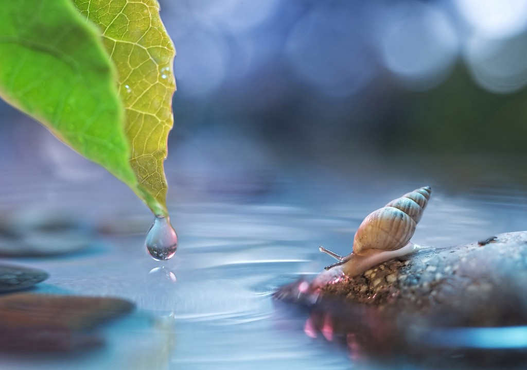macro-leaf-drop-water-stone-snail-glare-bokeh-animal-photos